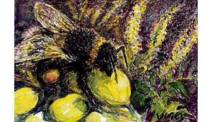 Not just a flying visit: a bumblebee on flowering mahonia. illustration: michael viney
