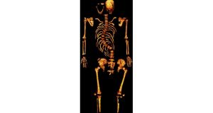 The skeleton of King Richard III, found under a car park in Leicester. Photograph: Reuters