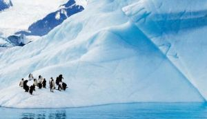 Penguins on the Western Antarctic Peninsula. photographs: steven kazlowski/ barcroft/getty and rob jones/ national science foundation via getty images