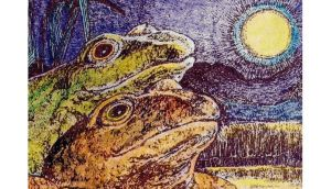 Moonlight serenade: frogs knotted in rapt amplexus. illustration by michael viney