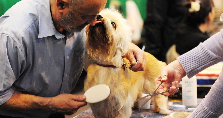 Bedlington Terrier Crufts 2013 Crufts 2013