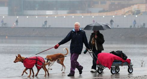 Dogs and owners arrive  for Crufts 2013 at the NEC, Birmingham. Photograph: PA