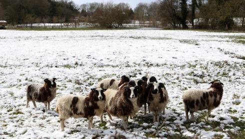 Sheep gather together in a snow covered field at Flordon , Norfolk in the UK. Photograph: Chris Radburn/PA Wire