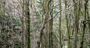 Native tree species are being re-established through impressive restoration programmes undertaken by the National Parks and Wildlife Service, by Coillte, and by NGOs such as Woodlands of Ireland