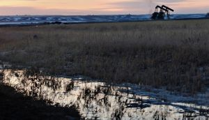 Oil pumpjacks are seen during sunrise in Williston, North Dakota March 14, 2013. REUTERS/Shannon Stapleton