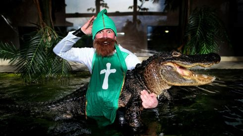 James Hennessy, aka 'St Patrick', with a nine-foot adult American Alligator at the Reptile Village, Gowran, Co Kilkenny, as preparations for St Patrick's Day continue in Dublin and around the world. Photograph: Julien Behal/PA Wire