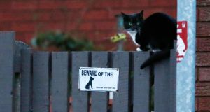 A cat perches on a fence outside a house where a 14-year-old girl was found dead amid a pack of aggressive dogs in Wigan, northern England. Photograph: Phil Noble/Reuters