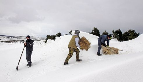 Keith McQuillan (left), Ruth Keyes and Donald O'Reilly (right) rescue a sheep trapped in a snow drift  in the Aughafatten area of County Antrim. Photograph: Cathal McNaughton/Reuters