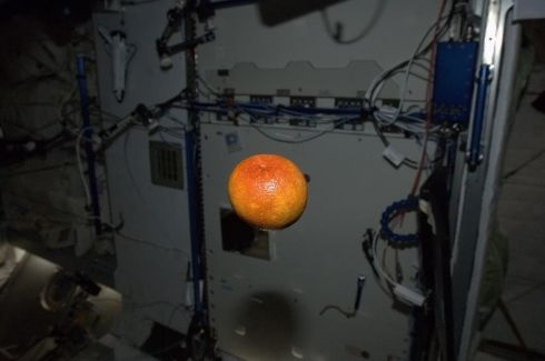 A beautiful blood orange, freshly-delivered from California. It was delicious - thanks SpaceX! Photograph: Chris Hadfield