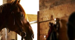 Horses slaughtered last year reached 24,000 compared to 2,002 in 2008.