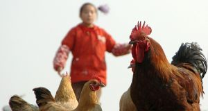 There are no known vaccines against the H7N9 virus. Photograph: Reuters