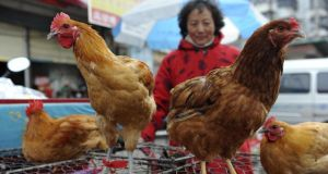 A chicken vendor at a market in Fuyang city, in central China's Anhui province. Two Shanghai men have died from a lesser-known type of bird flu in the first known human deaths from the strain. Photograph: AP