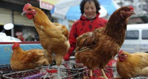 A vendor waits for customers near chicken cages at a market in Fuyang city, in central China's Anhui province on Sunday.