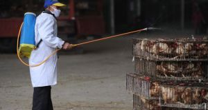 An employee wearing a protection suit sprays disinfectant on chickens at a poultry market in Hefei, Anhui province today.  Photograph: Reuters