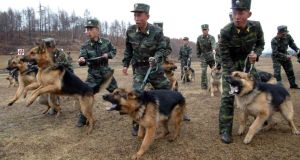 North Korean soldiers with military dogs take part in drills in an unknown location in this picture taken  last week and released by North Korea's official KCNA news agency. Photograph: Reuters/KCNA