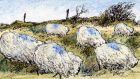 Finest fleeces: ewes have been blow-dried to perfection. Illustration: Michael Viney