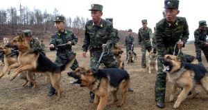 North Korean soldiers with military dogs take part in drills in an unknown location in this unauthenticated picture taken last week and released by North Korea's official KCNA news agency. REUTERS/KCNA RS