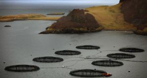 How Inis Oírr's farm might look: salmon nets in Oban, Scotland. Photograph: Jeff J Mitchell/Getty