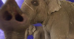 The move to ban wild animals in circuses in Britain was prompted by one owner's mistreatment of an elephant.