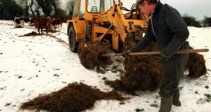 A Kildare Farmer sets out fodder for cattle during the recent cold weather