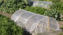 A homemade mini-hoophouse. Photograph: Richard Johnston