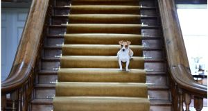 Sandy the Jack Russell stands guard. Photograph: Bryan O'Brien