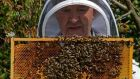 """You get the odd sting, all right,"" says beekeeper Liam McGarry. ""But the more you get, the less sore they are."" Photograph: Eric Luke"