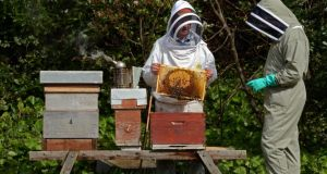 "The ""colony collapse"" phenomenon is mostly an American issue, says beekeeper Liam McGarry, but he agrees with this week's EU ban on the neonicotinoid pesticides some believe to be responsible. Photograph: Eric Luke"