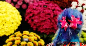 A woman with flowers in her blue dyed hair looks at chrysanthemums at the Chelsea Flower Show in London. Photograph: Luke MacGregor/Reuters