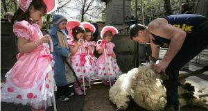 The All-Ireland and International Sheep Shearing and Wool Handling Championships take place in Cork this weekend. Photograph: Dara Mac Dónaill/The Irish Times