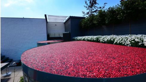 A display entitled A Cranberry Gathering by Alan Rudden and David Ryan of Gardens Now, on show at Bloom. Photograph: Bryan O'Brien/The Irish Times