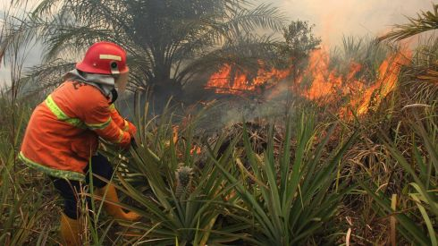 A firefighter tries to put out a fire at a plantation in Rokan Hilir district, Riau province, Indonesia. Riau authorities have deployed two fire brigade teams in Bengkalis district and Dumai to control peatland fires, Antara News Agency reported. The fires are being blamed for dense smog in neighbouring Singapore. Photograph: Aswaddy Hamid/Reuters