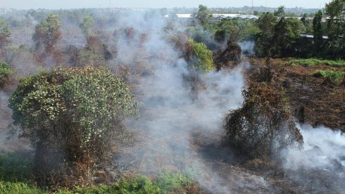 Smoke rises from burning peatlands on the outskirt of Pekanbaru in Indonesia's Riau province. Photograph: Azwar/Reuters