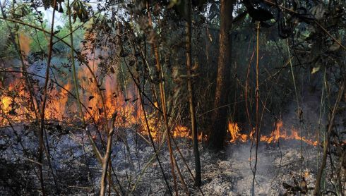 Bush fire leaves little behind in Rumbai, Pekanbaru, on Indonesia's Riau province. Photograph: Fikih Nauli/Reuters