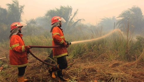 Firefighters at work in Rokan Hilir district, Indonesia. Photograph: Aswaddy Hamid/Reuters