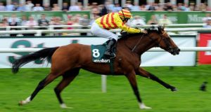 Saddler's Rock rates a solid selection to lift the Gold Cup for Ireland at Royal Ascot.