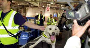 Sniffer dogs are  used to check large quantities of mail. Photograph: Eric Luke