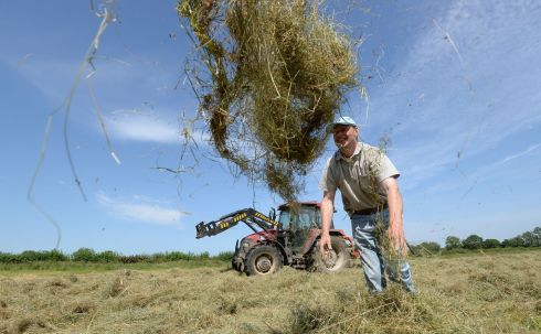 Farmer Laurence Ward from Oldtown, Co Dublin checks his hay after cutting it and reckons it will be ready for bailing by tomorrow. Photograph: Brenda Fitzsimons/The Irish Times