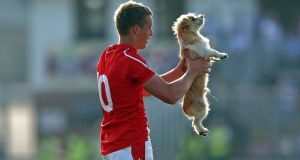 Ciaran Byrne of Louth removes a stray dog from the pitch in Newbridge. Photograph: Donall Farmer/Inpho