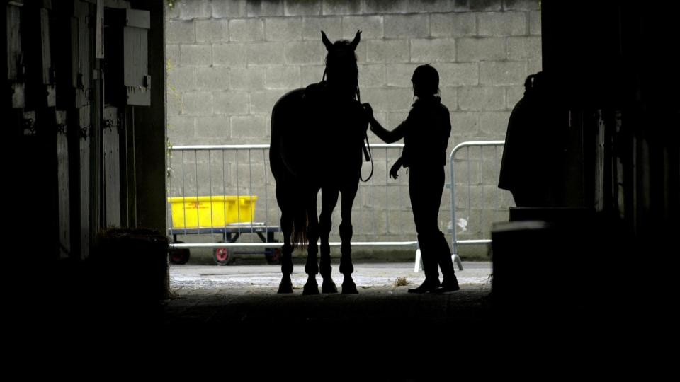 Direct export of horses to China moves a step closer