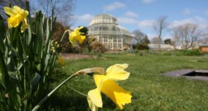 7. The National Botanic Gardens	attracted 544,685 visitors.