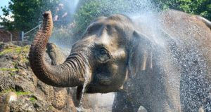 2. Dublin Zoo	attracted 1,029,417 visitors. Asian Elephant Bernhardine soaks up the spray to keep cool at Dublin Zoo during the recent heatwave. Photograph: Alan Betson / The Irish Times