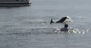 A screengrab from a video of a swimmer with Dusty the dolphin in Doolin last year. Photograph via YouTube