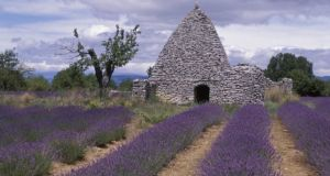 Lavender field in the Luberon. Photograph: Getty Images