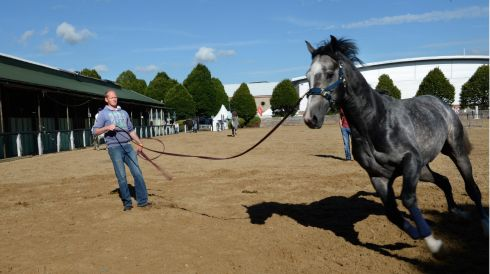 Edmund Hennigan, from Ballina, Co Mayo, stretches out 3-year-old stallion Iceman.
