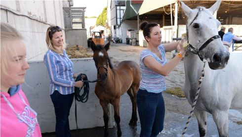From left: Emma Byrne, Patrice Byrne and Amy Dillon, from Now Ross, Co Wexford, with Connemara mare and foal Robe Meadow and Chucky.