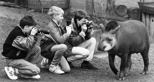 Bygone days: A Brazilian tapir parades in Dublin Zoo in 1989 for Liam Hyland, of Carmelite College, Moate, Co Meath, and Andrew Bowell and Brian Edge, of Wesley College, Dundrum, Co Dublin. The boys were preparing for the Fuji Young Photographer of the Year competition. Photograph: Jack McManus/The Irish Times