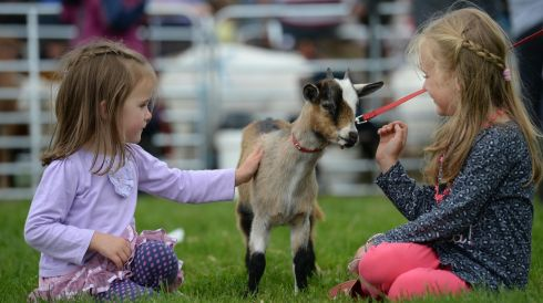 Sisters Ruby 3 and Hannah Corcoran 6 with a one year old goat at the  Virginia Show. Photo: Dara Mac Donaill / THE IRISH TIMES