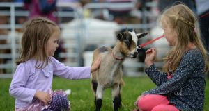 Sisters Ruby (3) and Hannah Corcoran (6) with a one year-old goat at the Virginia Show, in Co Cavan. Photographer: Dara Mac Dónaill/The Irish Times