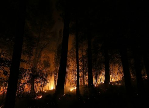 Fire burns in a grove of trees during the rim fire in Groveland, California. Photograph: Justin Sullivan/Getty Images